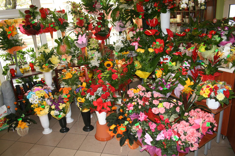 Image result for sosnowiec kwiaciarnia